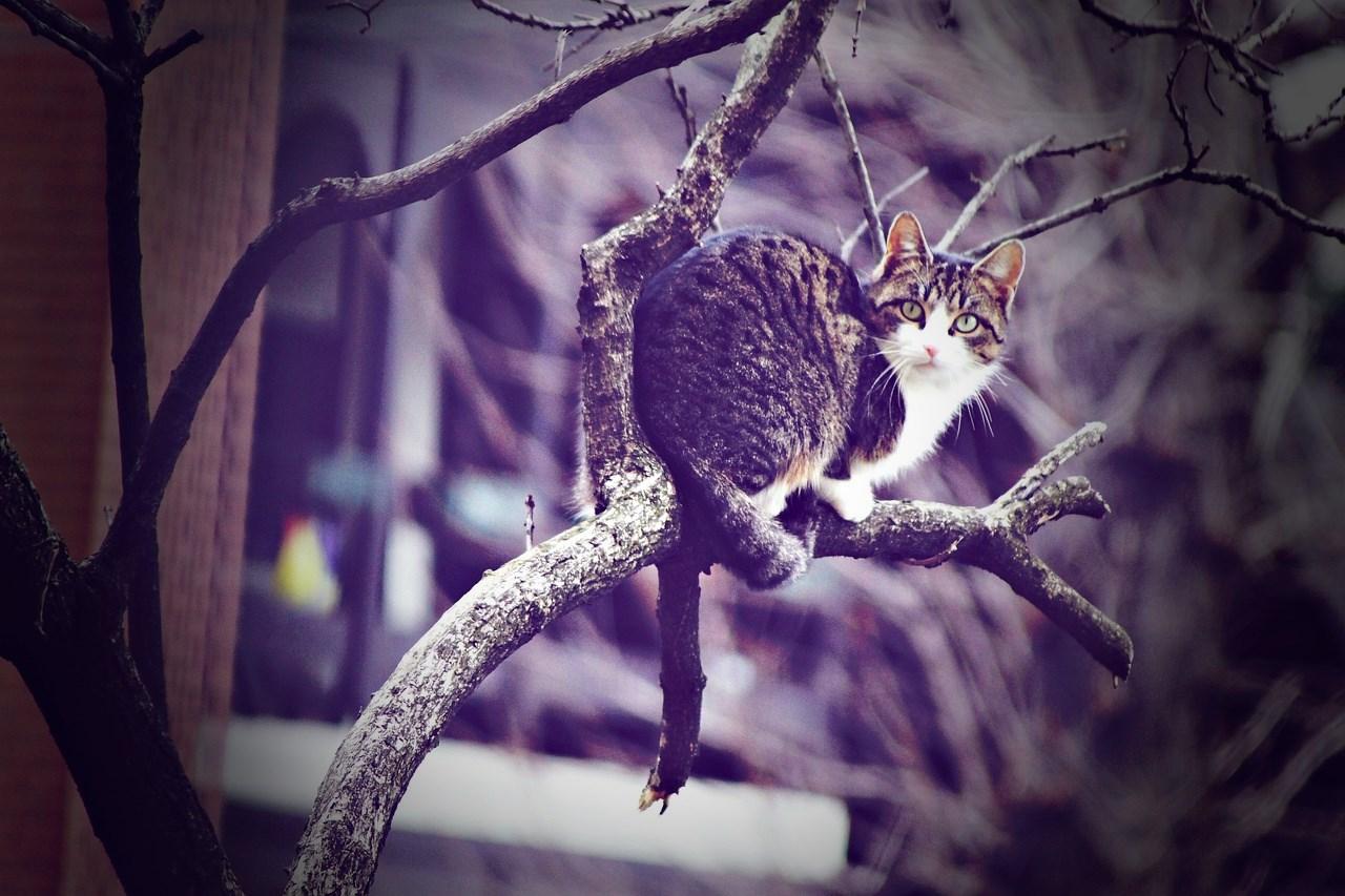 choisir arbre à chat